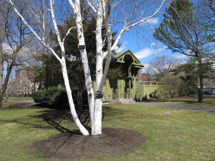 Boston Public Gardens. Photo By Colleen Ann.