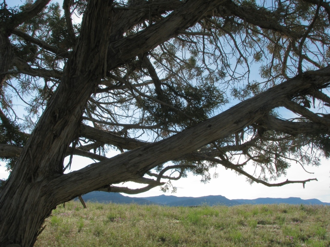 Fruita Desert. Photo By Colleen Ann.