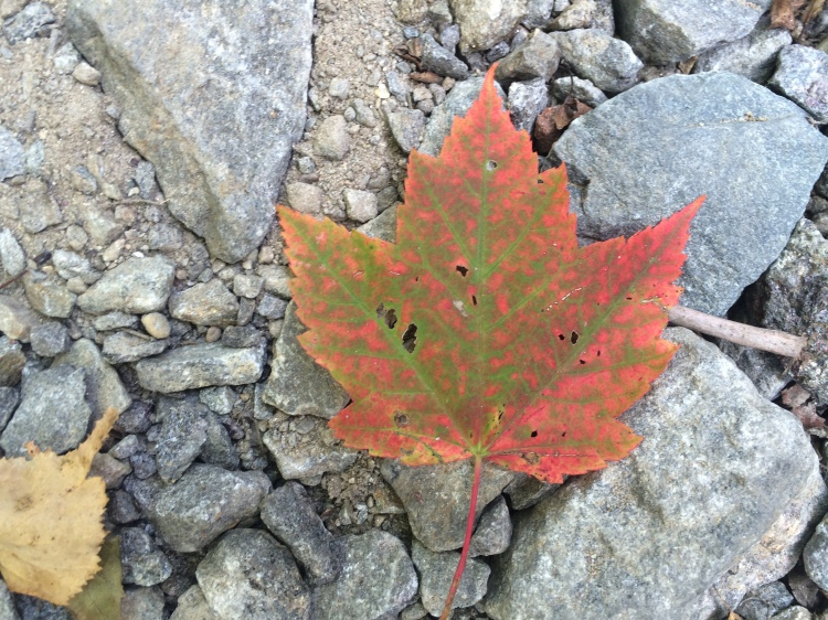 Maples are the first to go. Temple NH. Photo By Colleen Ann.