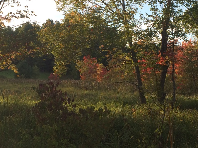 Swamp Maples. Greenfield NH. Photo By Colleen Ann.