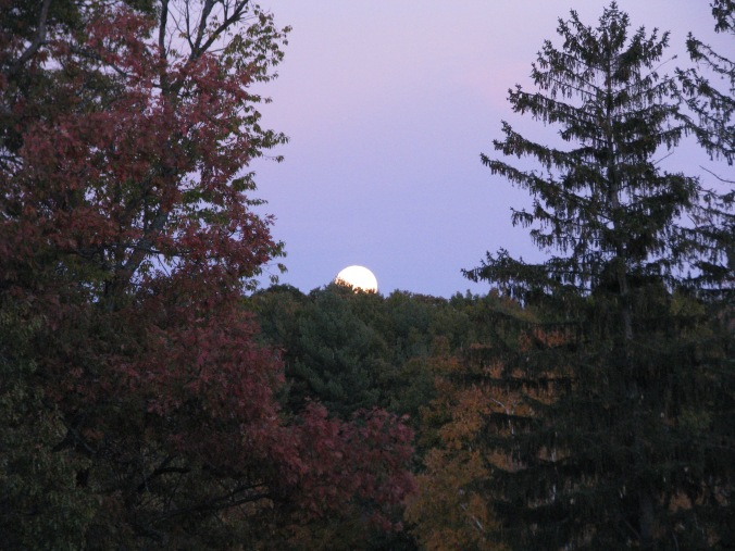Moonrise. Photo By Colleen Ann